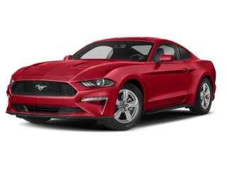 New 2019 Ford Mustang GT Premium for sale in Fredericton, NB