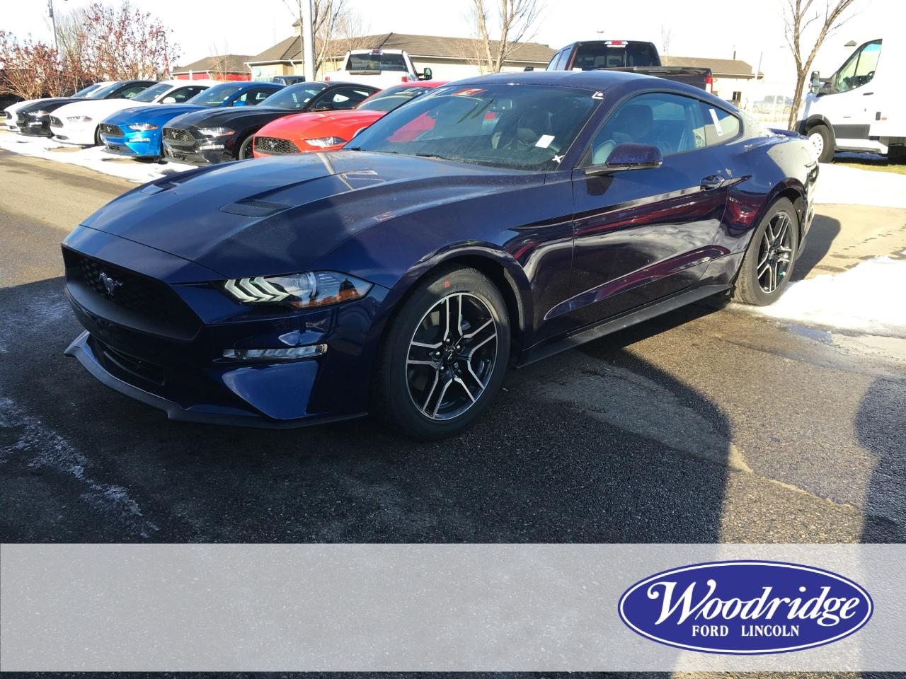 Used 2019 ford mustang ecoboost premium for sale in calgary alberta