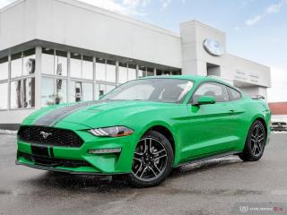 New 2019 Ford Mustang EcoBoost Fastback for sale in Winnipeg, MB