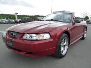 Used 2003 Ford Mustang CONVERTIBLE, CUIR, FILET COUPE VENT, TOI for sale in Vallée-Jonction, QC