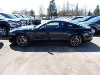 New 2019 Ford Mustang EcoBoost for sale in Peterborough, ON