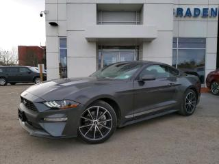 New 2020 Ford Mustang EcoBoost? for sale in Kingston, ON