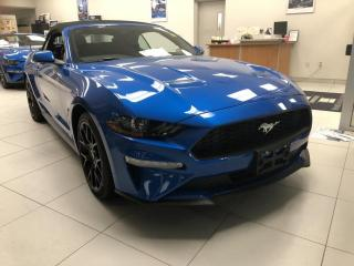 New 2019 Ford Mustang EcoBoost?? for sale in Brockville, ON