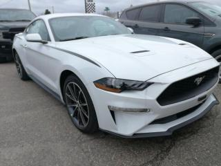 New 2019 Ford Mustang EcoBoost?? for sale in Pembroke, ON