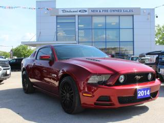 Used 2014 Ford Mustang GT RARE GLASS TOP | HTD LTHR | AUTO for sale in Winnipeg, MB