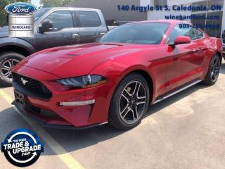 New 2020 Ford Mustang for sale in Caledonia, ON