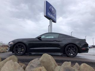 Used 2019 Ford Mustang EcoBoost for sale in Dieppe, NB