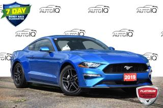 Used 2019 Ford Mustang EcoBoost ONE OWNER   LOW KMS!! for sale in Kitchener, ON