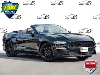 Used 2019 Ford Mustang One Owner | GT Premium Convertible | Triple Black for sale in Welland, ON